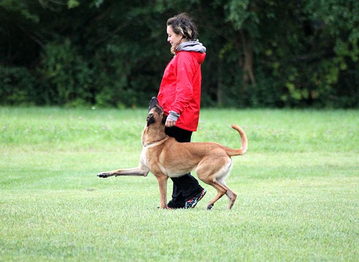 Blitz Pet Pros dog training