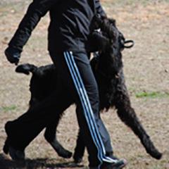 Client Dog Oscar