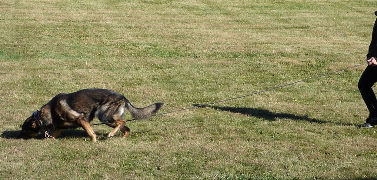 Dog Sports Tracking