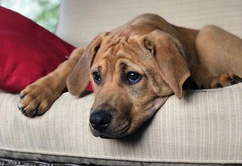 Puppy Development Blitz Pet Professionals